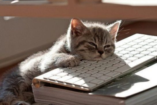 cute can asleep on computer