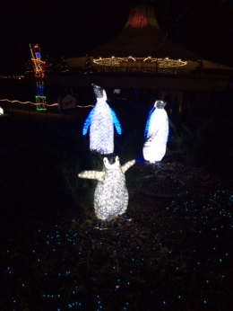 Penguins at Zoo Lights, Chicago
